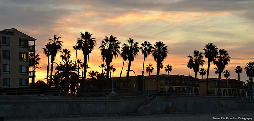 Palm silhouettes in the California sunrise
