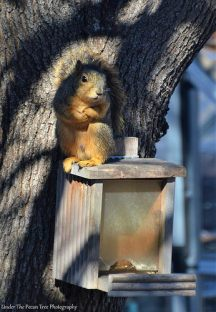"""... But in reality I'm cold. Ma'am, do you have some peanuts for this handsome squirrel?"""
