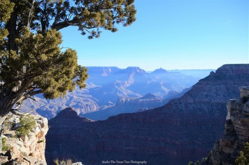 The Grand Canyon at the South Rim