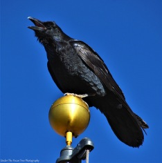 This raven was telling the tales of life in the canyon.