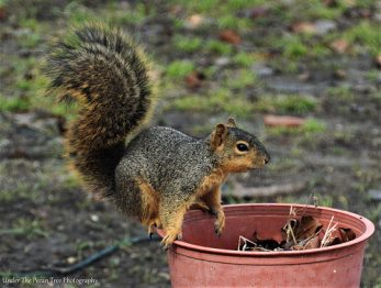 """Oh boy! This year I have a lot of work to plant seeds and nuts in the garden, again."""