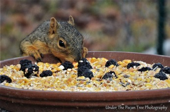 """Hmmm, nice buffet with fruit and nuts."""