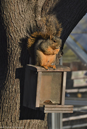 Mr. Squirrel uses his tail and the sun rays to stay warm.