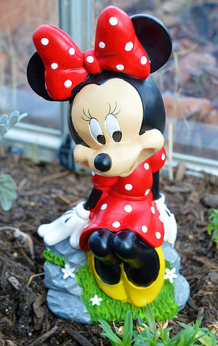 Minnie Mouse in my greenhouse
