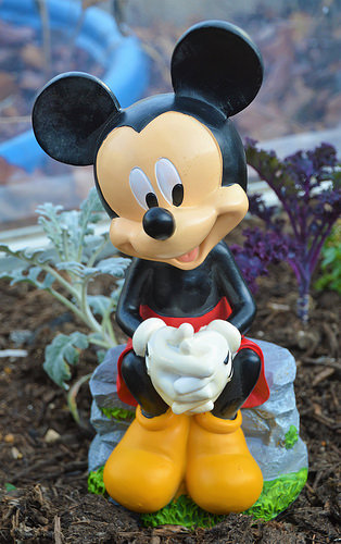 Mickey Mouse in my greenhouse