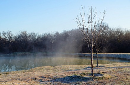 Foggy pond on a February morning