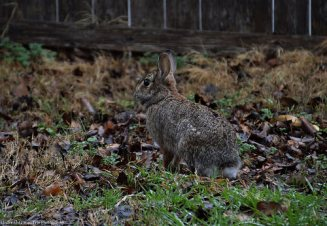 Mrs. Rabbit is grateful for the rain. Rain brings green grass and flowers, which will be great rabbit food.