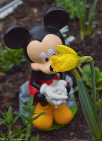 Mickey loves the new bloom in the greenhouse.