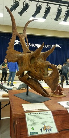 That's a big dino skull.