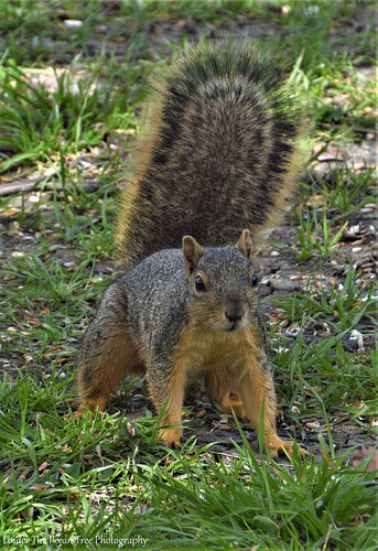 Mr. Squirrel keeps a close eye on me from the ground.