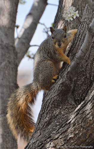 Mr. Squirrel keeps a close eye on me from the tree.