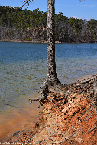 I wonder how long it takes, until it is enough eroded and make the tree fall into the lake. Maybe the tree roots prevented faster erosion (???)