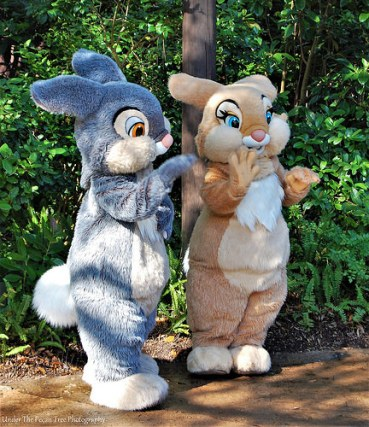 Thumper and his girlfriend in Disney's Animal Kingdom in 2011