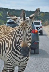 Standoff the Zebra way