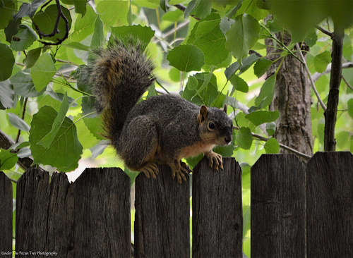 One more look, before she look for some old acorn and some berries.