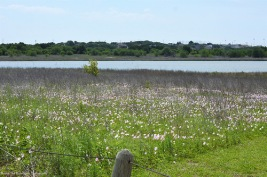 May vegetation at Lewisville Lake