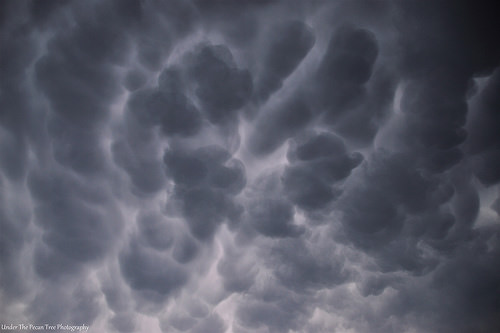 The Mammatus clouds look fierce. But they are usually harmless.
