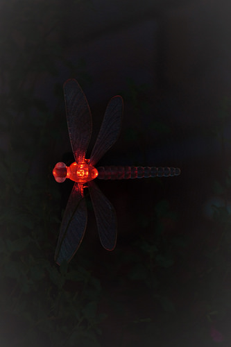 Dragonfly light in red