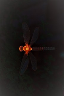 Dragonfly light in orange