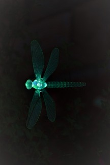 Dragonfly light in teel