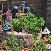 Everything flourishes in the Hummingbird/Butterfly Garden
