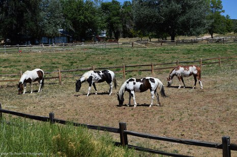 Horses at a nearby ranch, close by the resort