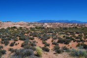 Petrified Dunes with the La Sal Mountains in the background