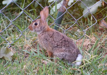 """""""Hmmm, there are some yummy radishes and carrots on the other side of the fence. I just have to outsmart the cats."""""""