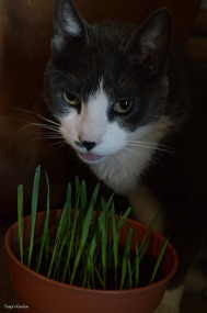"""Hmm, cat grass makes me smile!"""