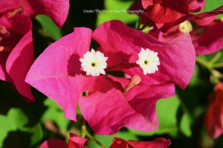 Nope! It's not an alien, but a Bougainvillea. ;)