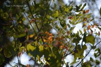 More signs of Autumn