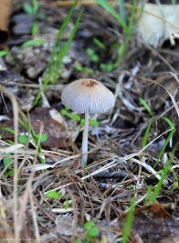 Cute little Mushroom in our backyard