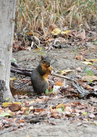 """Hmmm, the acorns are tasty!'"