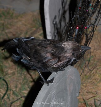 Nevermore on the gravestone (2011)