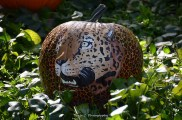 "A ""Boo at the Zoo"" Pumpkin (2012)"
