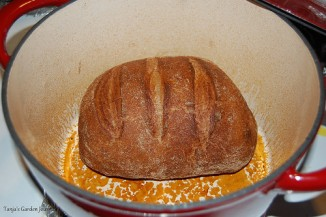 The bread turned out nice and crusty in the new Dutch oven. (2012)