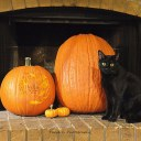 Courtney's cat, Tangles, posed for Halloween pictures in 2014.