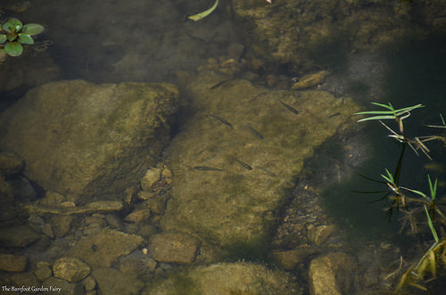 Some fish are in those little streams and side pools.