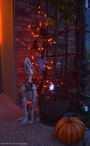 """Ranger"" in front of the Halloween tree."
