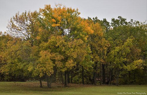 Autumn in Bill Allen Memorial Park