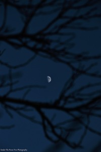 Waxing Gibbous Moon through tree branches (11-16-2018)