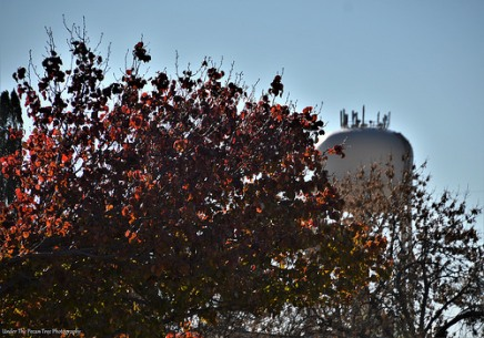 Autumn Water Tower I