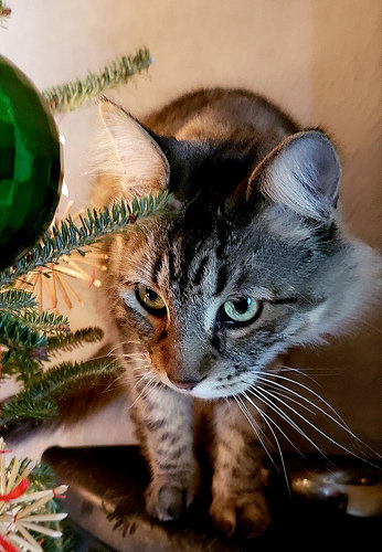 """ ... and the ornaments on the tree!"""