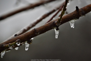 Small icicles on our peach tree branches