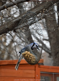 More peanuts for the Blue Jays