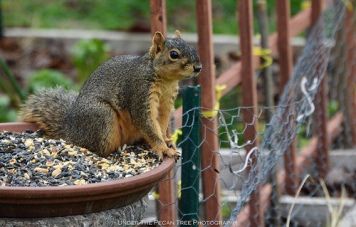 """When I eat enough seeds, that will keep me warm until the cold front passes, later this week."""