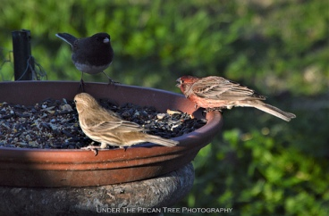 """Mr. House-Finch: """"QUIT CALLING MY WIFE NAMES! THERE IS PLENTY OF FOOD FOR ALL OF US!"""""""