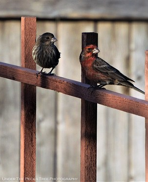 "Mrs. House-Finch: ""Did you had to get into a fight with this rude guy?"" ... Mr. House-Finch's ego is hurt, because his wife doesn't understand, that he loves her very much, and therefore he wants to protect her."