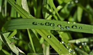 Grass rain droplets from the previous day