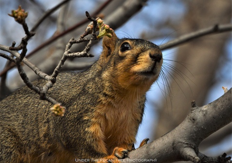 Sandy climbs up the branch to see, if the slinky feeder is full of peanuts.